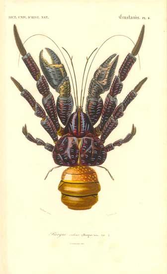 CoconutCrab1849