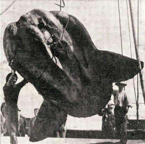 snfish