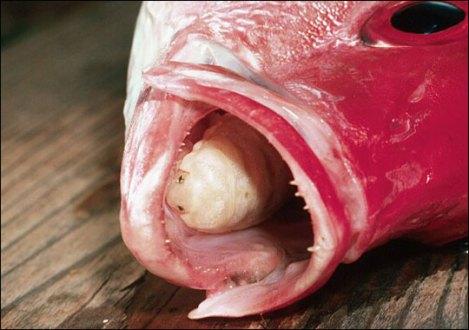 tongueeater